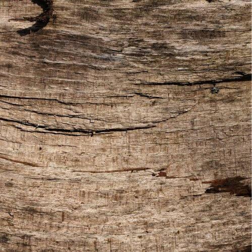 bøg, bøgetræsmøbler, bøgetræ, boboonline