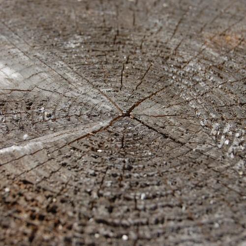 træ, træsorter, træmaterialer, træmøbler