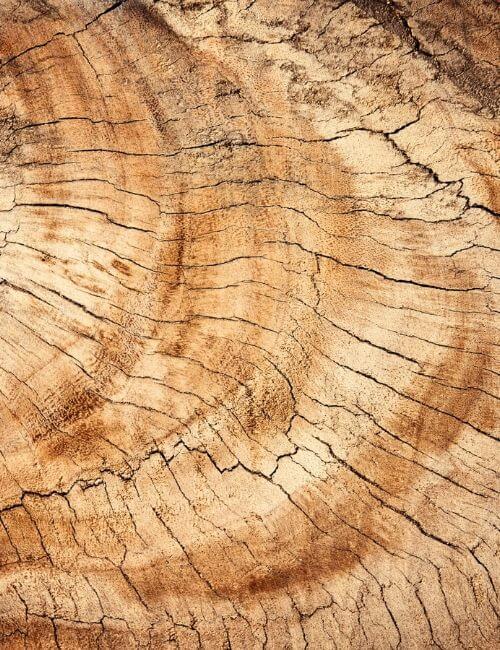 egetræ, eg, ege, egetræshylder, hylder, hylde, boboonline
