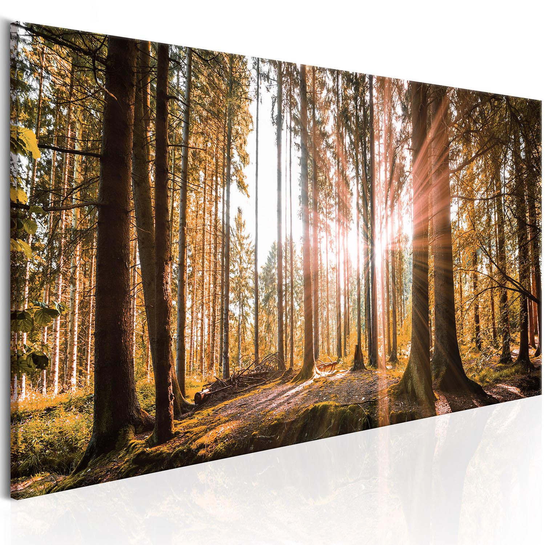 Image of Artgeist Billede af sommermorgen - Magical Autumn, på lærred 120x40