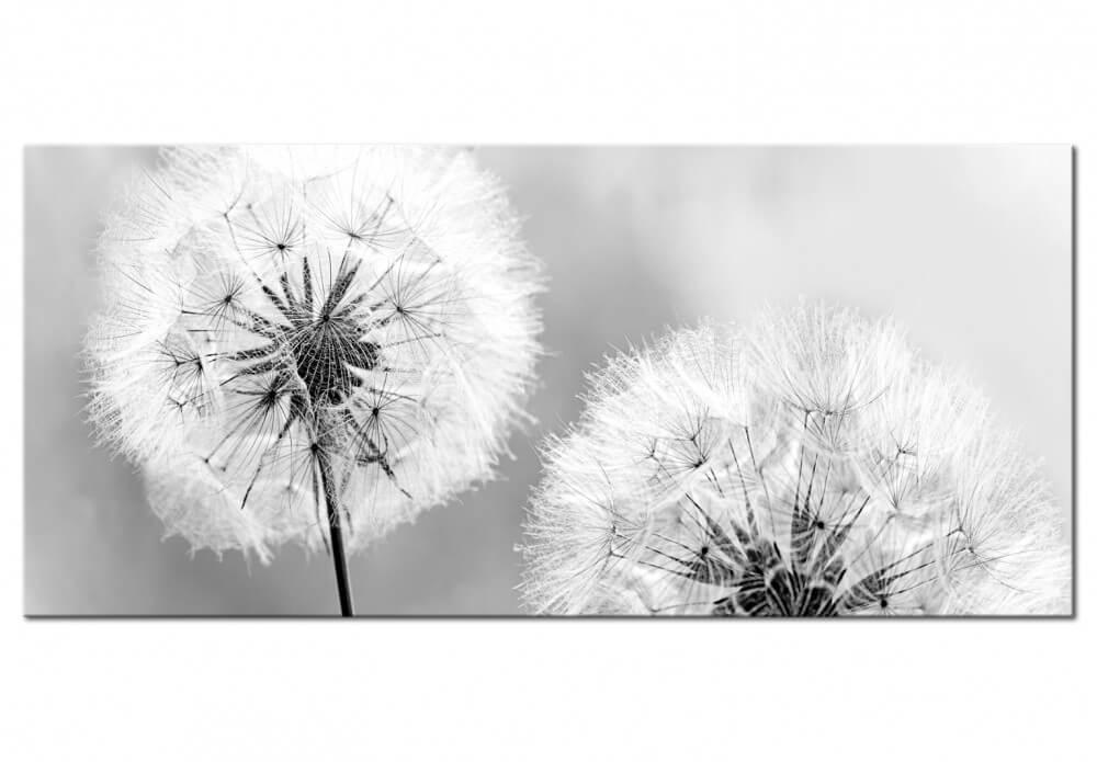 artgeist Artgeist billede af mælkebøtte - fluffy dandelions (1 part) grey wide (100x45) 100x45 på boboonline.dk