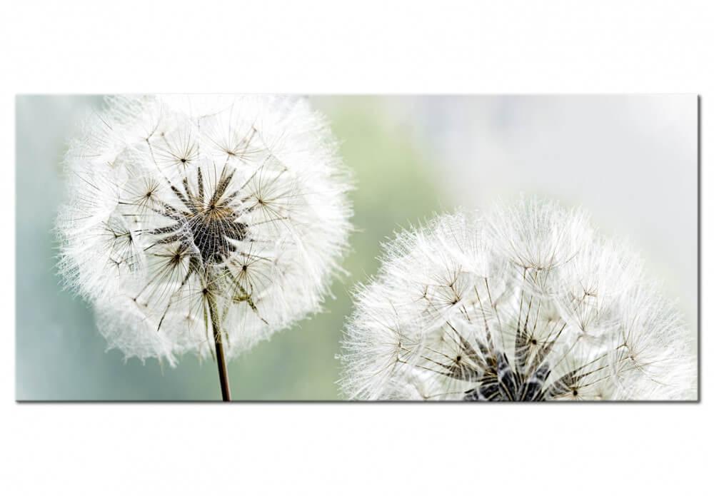Artgeist billede af mælkebøtte - fluffy dandelions (1 part) green wide (100x45) 100x45 fra artgeist på boboonline.dk