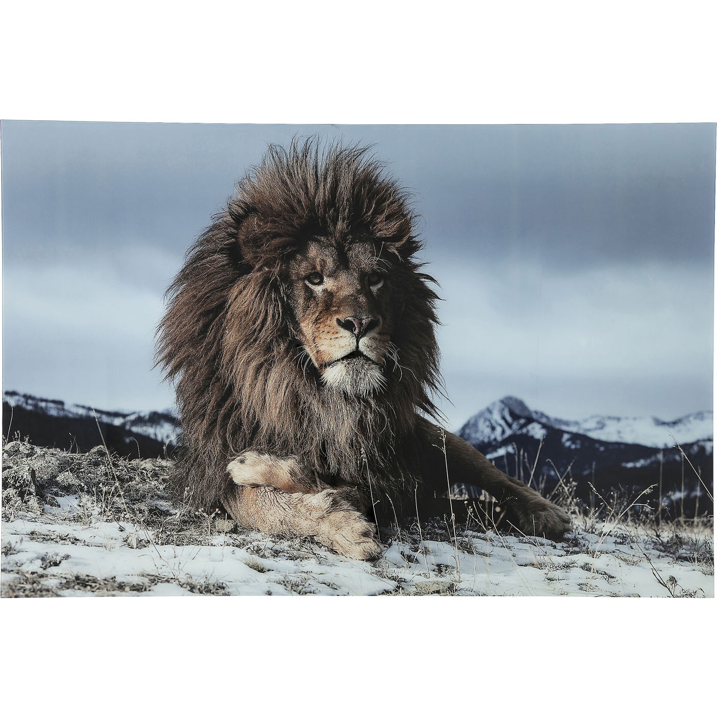 Image of   Kare Design Proud Lion Plakat, Glas 120x180cm