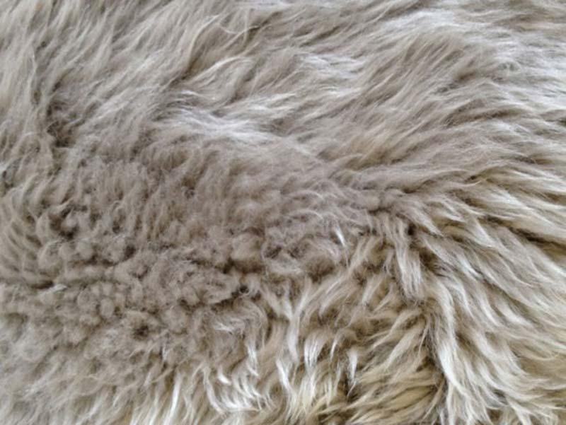 Billede af New Zealand rund skindhynde, Lysegrå